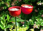 Eco Friendly Colour Feeder Cup