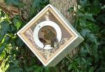Eco Friendly Urban Bird Feeder Box